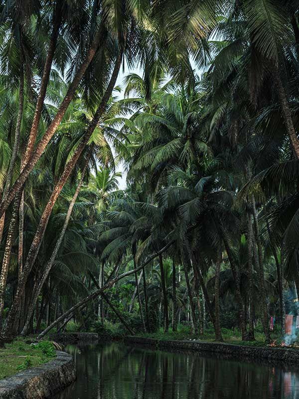 Kerala Yoga Reise-Kerala Reise-Indien Reise-Yoga Retreat Indien